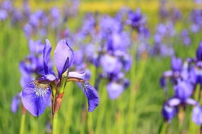 цветы на английском