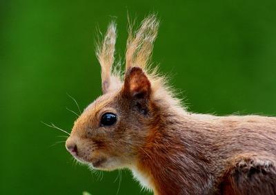 Тест: как называют этих животных на английском
