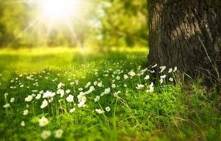 Стихи о весне на английском