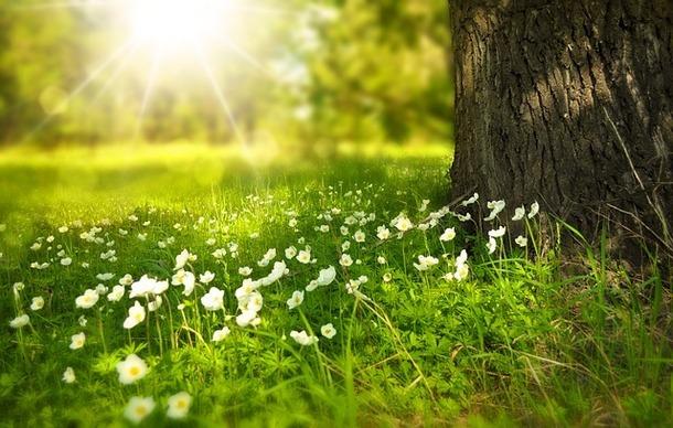 """""""Sprint"""" - стихотворение о весне на английском языке"""