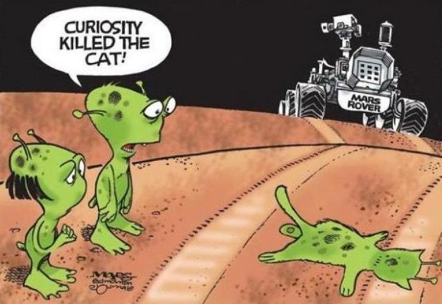 любопытство убило кошку