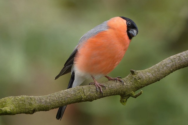птицы на английском языке
