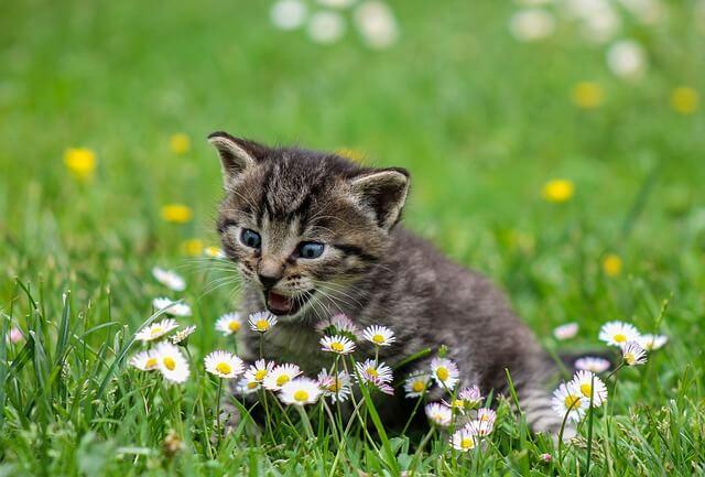 идиомы о кошках на английском языке